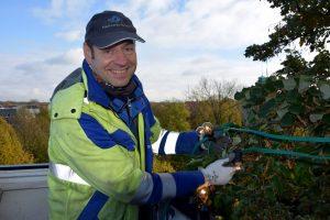 Stadtwerke-Mitarbeiter Martin Pfitzner bringt die ersten Lichterketten für die Weihnachtsbeleuchtung an. (Foto: Stadtwerke)
