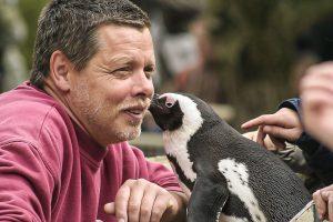 """Pinguindame Sandy und """"ihr"""" Pfleger Peter Vollbracht. (Foto: Allwetterzoo)"""
