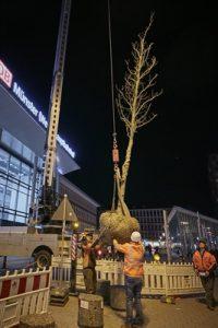 Mit Hilfe des Krans ging es für die Bäume in die vorbereiteten Pflanzgruben. (Foto: Presseamt)
