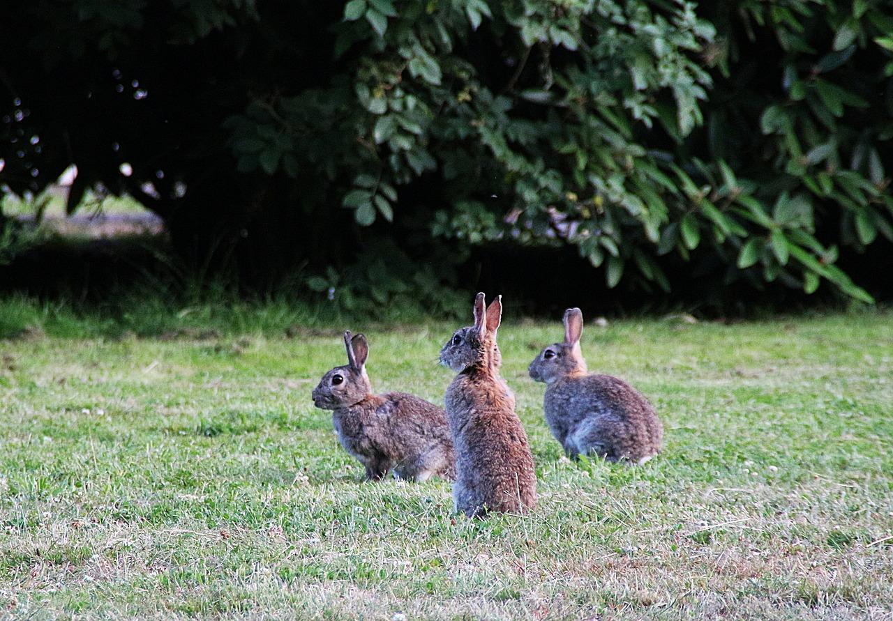 Do Squirrels Eat Cat Food