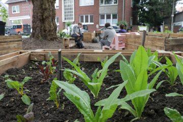 Gärtner werden am Bennohaus: Das geht im Bürgergarten ab Freitag. (Foto: Jakob Töbelmann)