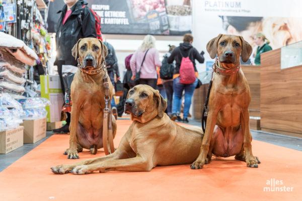 Natürlich waren auch die Vierbeiner gern gesehene Gäste auf der DOGLIVE 2020. (Foto: Carsten Pöhler)