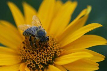 Um die Artenvielfalt zu stärken, organisiert die Umweltberatung eine Saatgut-Börse. (Foto: Stadt Münster)