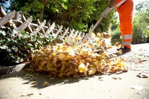 Der Herbst hat auch für die Abfallwirtschaftsbetriebe begonnen. Rund 1000 Tonnen Laub holen die Teams der AWM in jedem Jahr von den Straßen und Wegen. (Foto: Stadt Münster)
