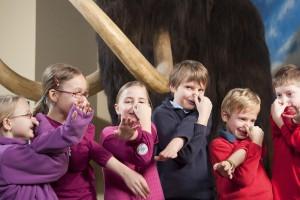 Kühl wird es den Ferienkids bei der Eiszeit mit Mammut im LWL-Museum für Naturkunde. (Foto: LWL / Oblonczyk)
