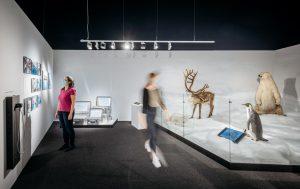 Eine Leitfrage der Ausstellung beschäftigt sich mit der Ausbreitung des Menschen, der selbst in unwirtlichen Regionen wie der Antarktis überlebensfähig ist. (Foto: LWL/Steinweg)