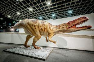 """Mehr über Wiehenvenator und Co. erfahren die Gäste in der neuen Dinosaurier-Schau """"The Big 5+"""" im LWL-Museum für Naturkunde. (Foto: LWL / Steinweg)"""