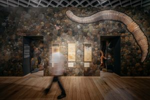 """Die begehbare Bodenkammer lässt die Ausstellungsbesucher von """"Alleskönner Wald"""" eine Reise in den Waldboden unternehmen. (Foto: LWL/ Steinweg)"""