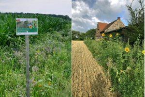 An vielen Feldern in und um Münster bieten Blühstreifen den Insekten Nahrung und Schutz. (Fotos: WLV e.V.)