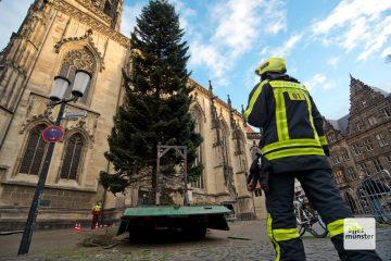 Unter der Leitung der Feuerwehr Münster wurde die Tanne vor St. Lamberti heute aufgestellt (Foto: Bührke)