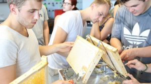 Der Honig sitzt in den Waben. Mit Entdecklungsgabeln entfernen die Studierenden die Wachsdecke, damit der Honig leichter fließen kann. (Foto: FH Münster/Fachbereich Oecotrophologie – Facility Management)