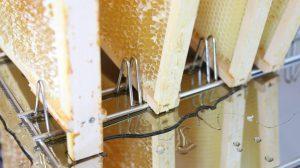 Der Honig fließt aus den Rahmen ab, nachdem die Studierenden die Wachsdeckel abgenommen haben. (Foto: FH Münster/Fachbereich Oecotrophologie – Facility Management)