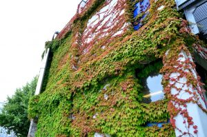 Begrünte Wände schaffen Verdunstungsflächen und sorgen für ein besseres Klima. (Foto: FH Münster/Pressestelle)