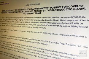 Eine schlichte Pressemitteilung auf den Seiten des Zoos von San Diego berichtet über den weltweit ersten Fall von coronapositiven Gorillas in einem Zoo (Foto: Michael Bührke)