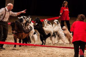 Die große Doglive-Gala ist einer der Höhepunkte der Messe in der Halle Münsterland. (Foto: sg)