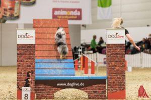 Die Doglive in der Halle Münsterland ist eine Messe, um die uns Hundefans aus anderen Städten beneiden. (Foto: Carsten Pöhler)