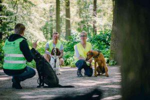 Bevor die Rettungshunde in den Einsatz dürfen, steht eine umfangreiche Ausbildung an. (Foto: Johanniter)