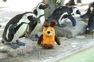Wo ist die Maus? Perfekt versteckt zwischen den Pinguinen. (Foto: Allwetterzoo Münster)
