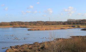 Der Große Stauteich der Rieselfelder mit neuem Flachwasserbereich. (Foto: Biologische Station Rieselfelder Münster)