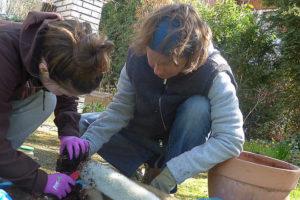 In den Zeiten von Corona ist auch Biologie-Unterricht im eigenen Garten möglich. (Foto: Brandewide)