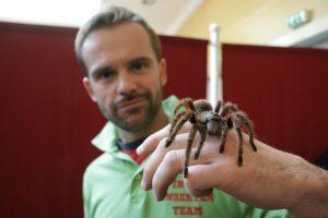 In der Ausstellung werden auch exotische Spinnen gezeigt. (Foto: Pressefoto)