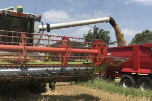 Insgesamt werden inMünster auf rund 7.000 Hektar Getreide angebaut. (Foto: Westfälisch-Lippischer Landwirtschaftsverband)