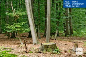 Die Forschungsergebnisse vieler Projekte des Instituts für Landschaftsökologie bestätigen die negativen Auswirkungen des Klimawandels zum Beispiel auf unsere Wälder. (Foto: Michael Bührke)