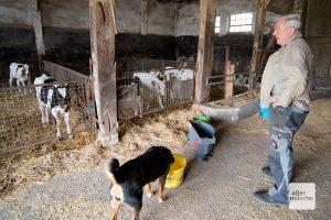 Die Ställe sind offen und gut durchlüftet, damit die Kühe im heißen Sommer nicht zu sehr unter der Hitze leiden. (Foto: Michael Bührke)
