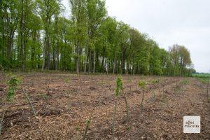 Der vordere Bereich muss komplett neu wiederaufgeforstet werden. Im Hintergrund steht noch der Buchenwald. (Foto: Michael Bührke)