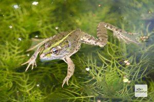 Fließgewässer sind Heimat vieler empfindlicher Tier- und Pflanzenarten. (Foto: Michael Bührke)