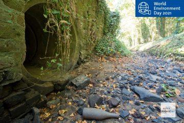 Viele Fließgewässer Münsters wie hier der Kinderbach sind im Sommer nur noch trockene Gräben. (Foto: Michael Bührke)