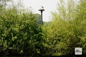 Die Rieselfelder sind unter Vogelexperten deutschlandweit bekannt. (Foto: Michael Bührke)