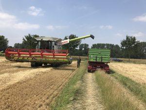 Auch in Münster ist die Getreideernte schon in vollem Gange. (Foto: WLV e.V.)