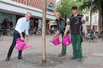 Münsters Bäume brauchen in diesen Wochen Hilfe: Umweltdezernent Matthias Peck sowie Dirk Pauluweit und Alfons Bertling vom Grünflächenamt zeigen, was getan werden muss. (Foto: Stadt Münster)