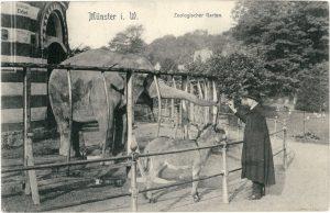 """Postkartengruß aus dem Zoologischen Garten: Ein Besucher füttert die Elefantendame """"August"""" vor dem Elefantenhaus."""