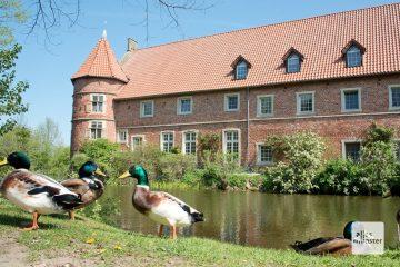 Auf der Gräfte von Haus Vögeding leben zahlreiche Enten und Gänse. (Foto: Michael Bührke)