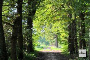 Der Große Lodden ist eines der schönsten Waldgebiete Münsters (Foto: Michael Bührke)
