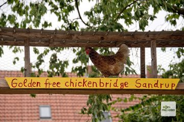 "Die ""Golden Free Chicken Bridge"" in Sandrup (Foto: Michael Bührke)"