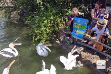Zumindest die Pelikane scheinen sich bereits auf das Festival zu freuen, vielleicht liegt es aber auch an den Fischen, die ihnen Nici Lebel und das Duo Ooton zuwerfen. (Foto: Zookünstler)