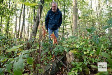 """Dr. Wilhelm Bauhus entdeckt zwischen Gestrüpp die Überreste des Kriegsgefangenenlagers """"Haus Spital"""" (Foto: Bührke)"""