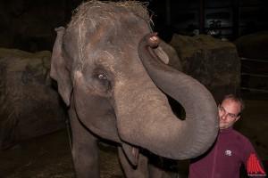 Revierleiter Michael Adler mit Elefantin Corny (Foto: sg)