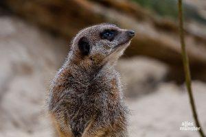 Lockdown im Allwetterzoo oder nicht? So oder so: Die Pflege der Tiere muss gewährleistet sein. (Archivbild: Stephan Günther)