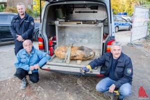 (v.l.:) Peter Asmussen, Heinz-Dieter Berchem und Karl-Friedrich Schröder vom Kampfmittelbeseitigungsdienst der Bezirksregierung zeigen die unschädlich gemachte Bombe. (Foto: th)