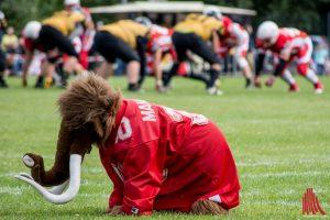 Für Ladies & Juniors: Am 9. Februar findet das nächste American Football Camp der Münster Mammuts statt. (Archivbild: Thomas Hölscher)