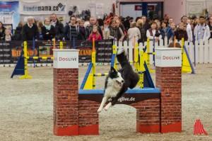 Hundesport - ein großes Thema auf der DogLive. (Foto: th)