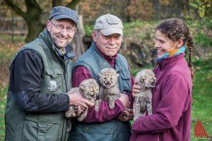Kurator Dr. Dirk Wewers (l.), Tierpfleger Alexander Dietrich und Tierpflegerin Anke Riem mit den 3 Gepardenbabies. (Foto: Thomas Hölscher)