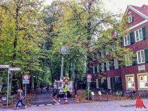 Mitarbeiter der Stadtwerke schmücken die ersten Bäume im Innenstadtbereich. (Archivbild: th)