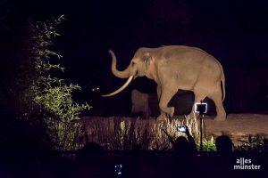 """Wer am nächsten Samstag zu """"Nachts im Zoo"""" in den Allwetterzoo möchte, sollte sich sputen. Die auf 4000 Stück limitierten Karten sind bereits zur Hälfte ausverkauft. (Archivbild: Thomas Hölscher)"""