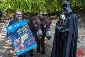 """Zoochef Thomas Wilms freut sich schon jetzt auf """"Nachts im Zoo"""". Die Besucher werden an zwei Terminen auch auf die Poitou-Riesenesel und Figuren aus """"Star Wars"""" treffen. (Foto: th)"""
