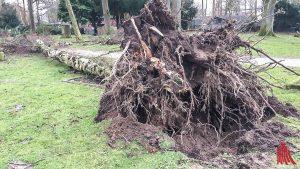 Auch im Schlosspark stürzten Bäume um. Die Gefahrenstellen wurden bereits beseitigt. (Foto: cabe)
